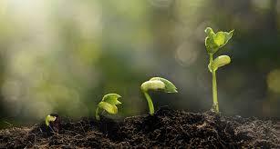Pertumbuhan dan Perkembangan