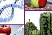10 Manfaat dan Bahaya Makanan Hasil Rekayasa Genetika